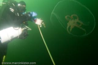 baltic_diving_0809_0023.jpg
