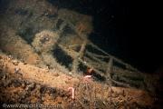 diving_franken_0001.jpg